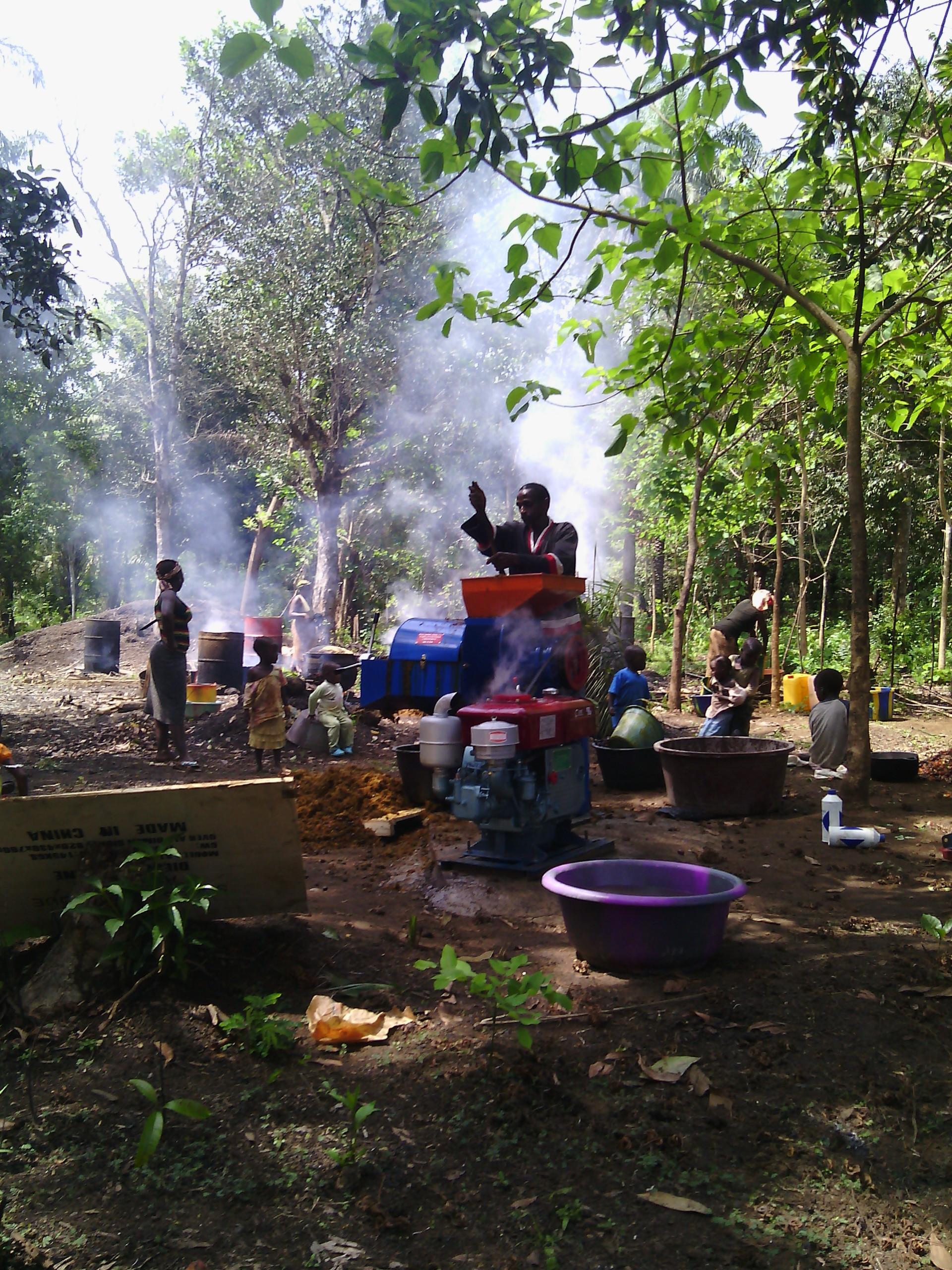 oil palm sara in peace corps guinea