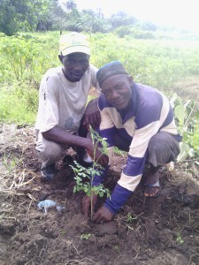 Kala and Bafode, leaders of a gardening groupement, posing with one of the Moringa trees we planted on their land. The Nitrogen fixing plant will improve their soil quality and the leaves can be periodically cut back and used as a green manure.