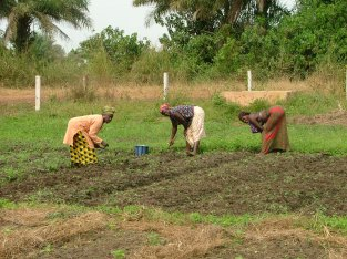 Members of a gardening collective work at weeding their plots.